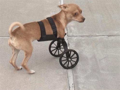 استفاده از پرینتر سه بعدی در ساخت اسکوتر برای سگی که دو پا دارد
